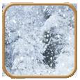 oso-de-nieve